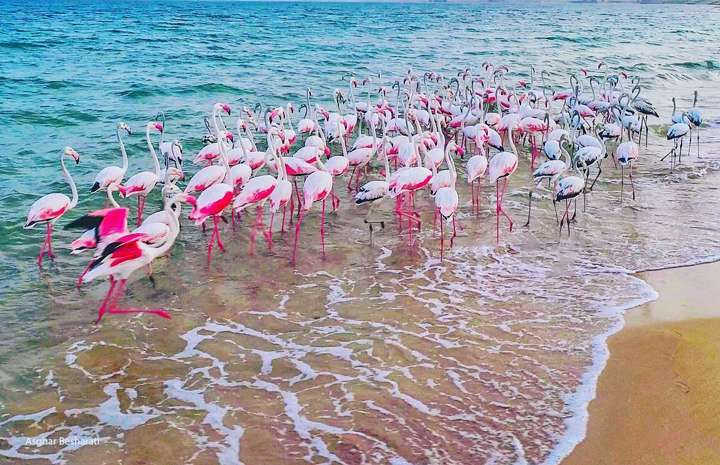 Qeshm Day Tour for Both History and Nature Lovers