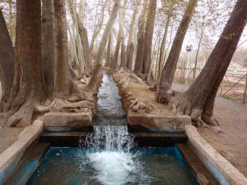 2 Persian Gardens You Must Visit in a Yazd Tour