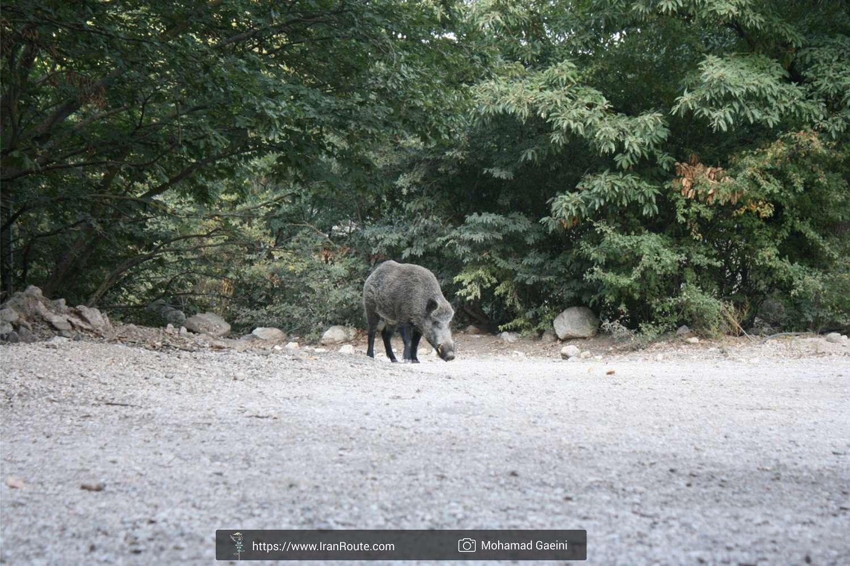 7-Day Iran Wildlife Tour: The Adventure through Golestan National Park