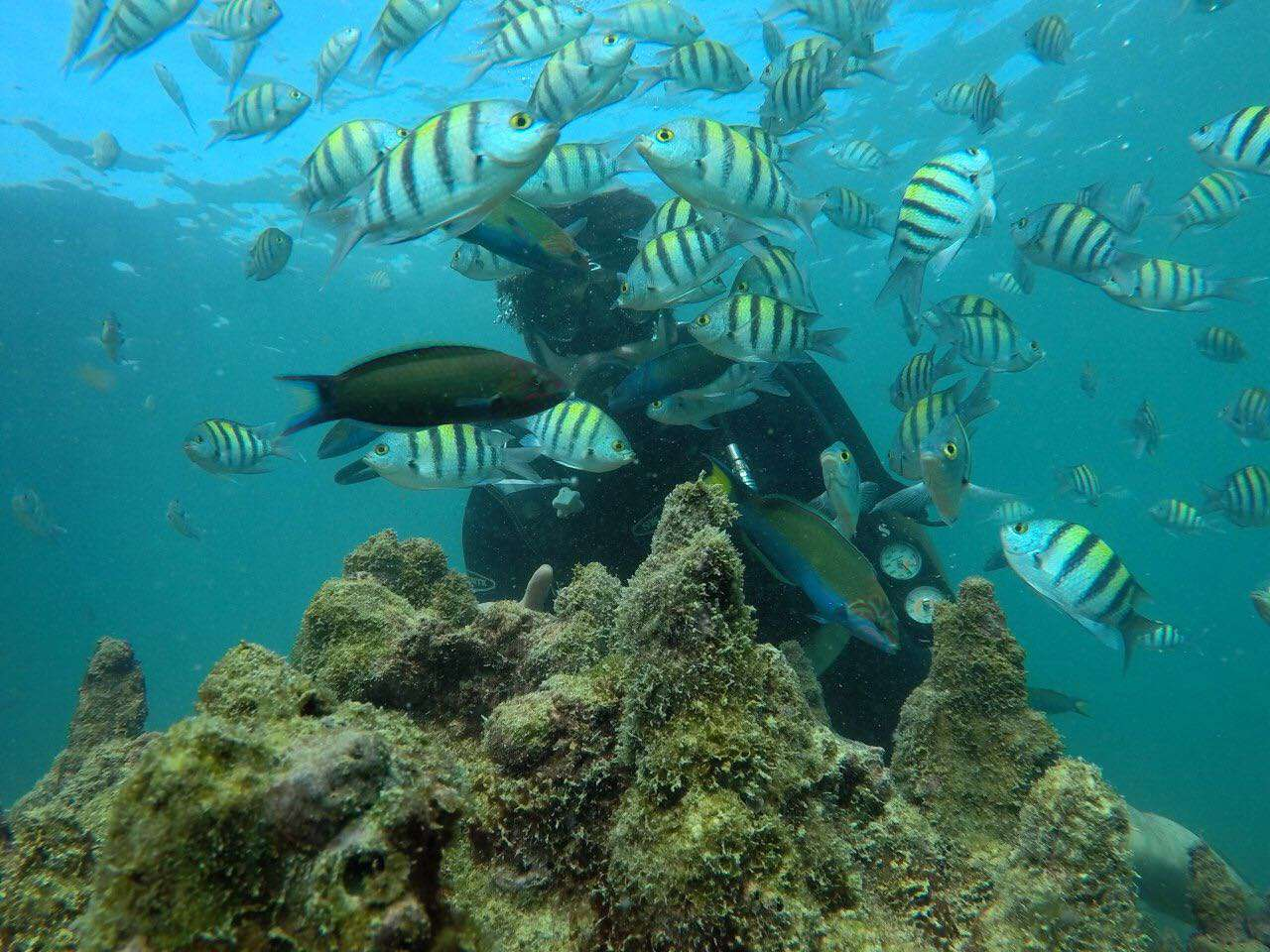 The Best Scuba Diving Destination in Persian Gulf: Try The Underwater Experience in Qeshm Island