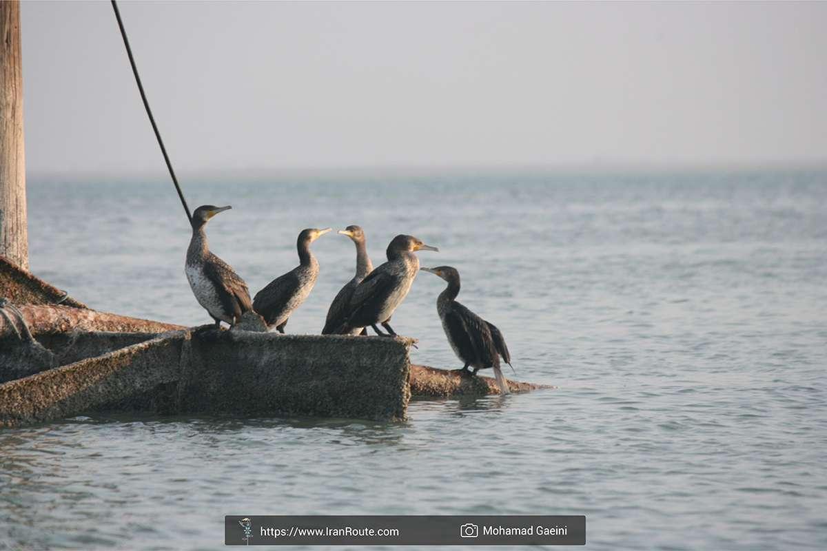 4 Days of Wildlife Adventure in Iran